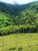 Salento 和其棕榈树,哥伦比亚 — 图库照片