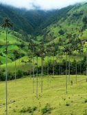 Salento a palmovými stromy, kolumbie — Stock fotografie