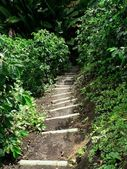 Path through coffee farm, colombia — Stok fotoğraf
