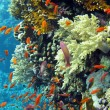 Coral reef with shoal of orange fishes — Stock Photo #10053527