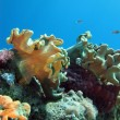 Stok fotoğraf: Coral reef on bottom of red sea