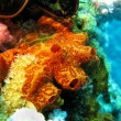 Coral reef with sponge — Stock Photo #9668480