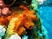 Coral reef with sponge — Stock Photo