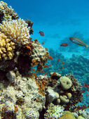 Bottom of sea with coral reef — Stock Photo