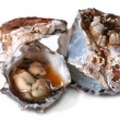 Stock Photo: Oyster and Shell