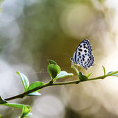 Beautiful butterfly in the meadow. Lesser Grass Blue Zizina otis — Stock Photo