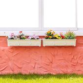 Boîte de fenêtre et fleur — Photo