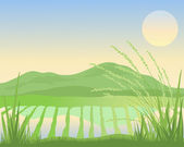 Paddy fields — Stock Vector