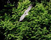 Flying falcon — Stock Photo