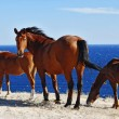 Beautiful horses — Stock Photo #8943721