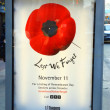 Stock Photo: Remembrance Day Poppy