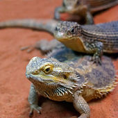 The family of reptiles. — Stock Photo