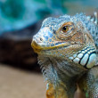Stock Photo: Beautiful reptile