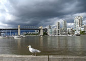 Seagull fronts historic Burrard bridge in Vancouver (Canada) und — 图库照片