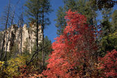 Fall colors some trees red, others yellow in forest near Sedona. — Stock Photo