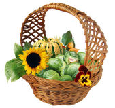 Basket with brussels cabbage — Stockfoto