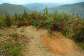 山ヒマラヤ、インド、ウッタラーカンド州 — ストック写真