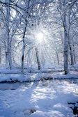 Sun in the winter forest — Stock Photo