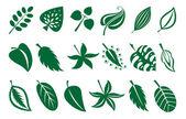 Zbiór liści — Wektor stockowy