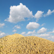 Soybean harvest — Foto Stock