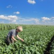 Agronomy — Stock Photo #8894152