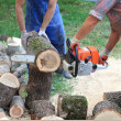 Stock Photo: Wood cutting