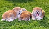 Pet dogs — Stock Photo
