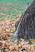 Leaves raking — Stock Photo