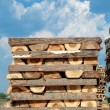 Lumber industry — Foto Stock