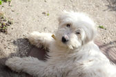 Pet dog — Stock Photo