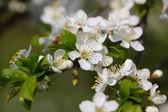 Spring — Stock Photo
