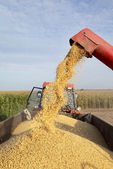 Soybean harvesting — Stockfoto