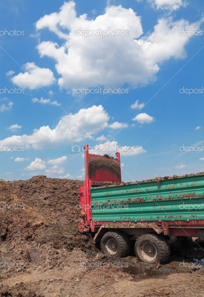 Discharge of cow dung from tractor trail  Stock Photo #8913316