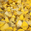 Autumn leafs — Stock Photo