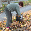 Stock Photo: Leaves picking