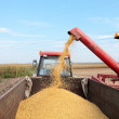 Soybean harvesting — Stock Photo #8923824