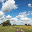 Farmland — Stock Photo