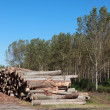 Lumber industry — Stock Photo #8927231