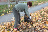 Leaves picking — Fotografia Stock