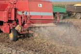Soy harvesting — Stock Photo