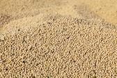 Récolte de fèves de soja — Photo