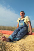 Soy bean harvesting — Stock Photo