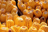 Corn pile — Stock Photo