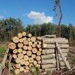lumber industry — Stock Photo
