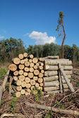 Lumber industry — Stock Photo