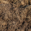 Dung background - Stock Photo