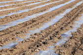 Agriculture — Photo