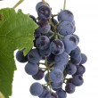 Grape — Stockfoto