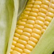 Corn cob — Stockfoto
