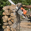 Wood cutting - Foto Stock